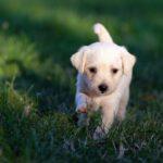 Nomi per cani femmine: corti, originali, romantici e divertenti