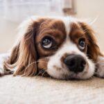 Cani più belli del mondo: razze e caratteristiche principali