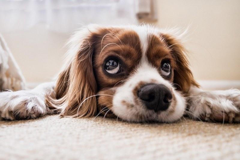 Cani-più-belli-del-mondo