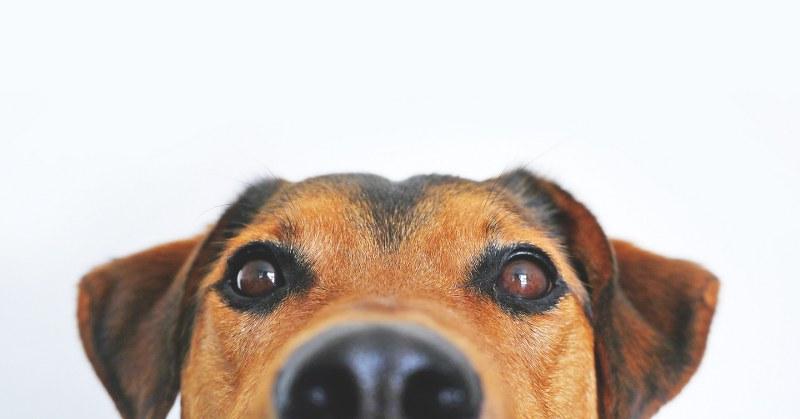 Come-vedono-i-cani
