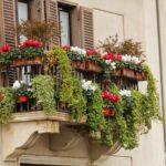 Gli-alberi-da-balcone-da-tenere-in-vaso